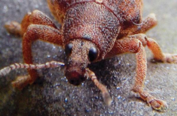 escarabajo2_ok